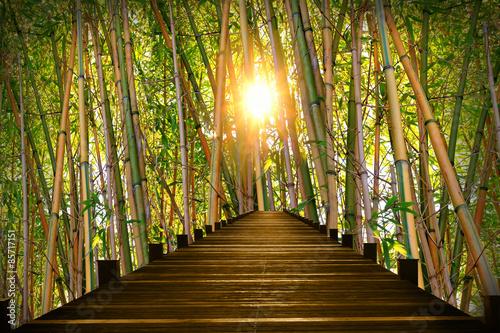 Fotografía  Steg im Bambuswald