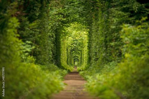 long tunnel of love in Ukraine Fototapeta