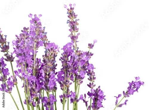 Cadres-photo bureau Lavende Lavender, Lavender Coloured, Flower.