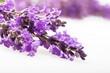Lavender, Flower, Spa Treatment.