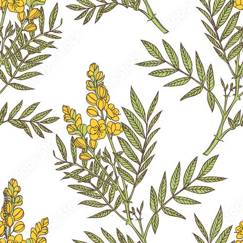 Fotografia  senna plant - vector seamless floral pattern
