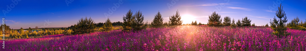 Fototapeta summer landscape with the blossoming meadow, sunrise.panorama