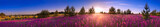 Fototapeta Natura - summer landscape with the blossoming meadow, sunrise.panorama