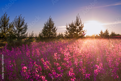 Marron chocolat landscape with the blossoming meadow at sunrise