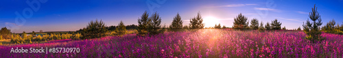 Poster Panoramafoto s summer landscape with the blossoming meadow, sunrise.panorama