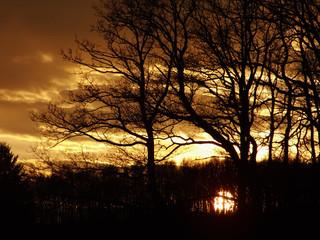 Goldener Sonnenuntergang im Winter hinter Bäumen