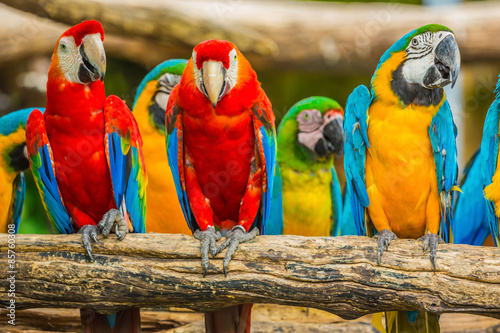 Macaw parrots birds.