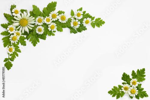 Fotografía  White daisy frame