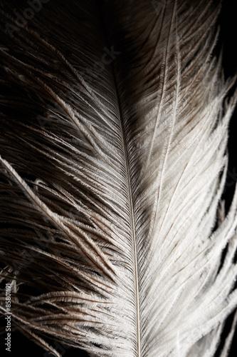 Foto-Kuscheldecke premium - Ostrich feather (von Nik_Merkulov)