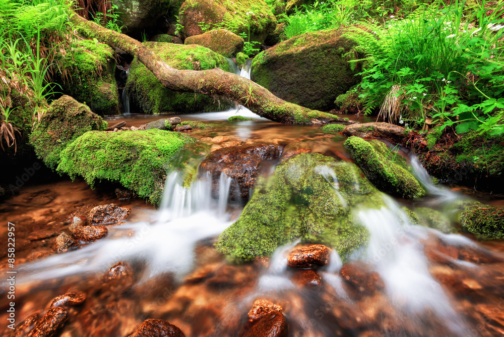 Fototapeta Stream gently cascading down a mountain forest