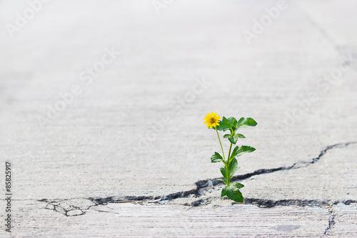Fotografia yellow flower growing on crack street.