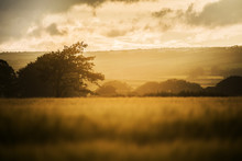 Hazy Summer Sunset In The Fields, Cornwall, UK
