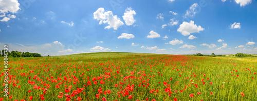 Foto auf Gartenposter Landschappen Poppy field in summer countryside