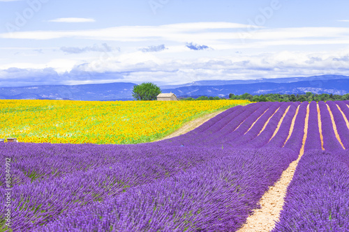 Spoed Foto op Canvas Violet violet fields of blooming lavander and sunflowers in Provence