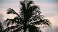 Footage Of Tropical Palm Tree ...