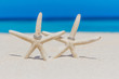 wedding rings on star fish, beach wedding concept, outdoor weddi