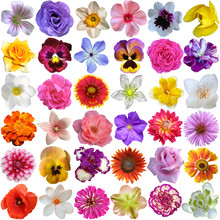 Big Selection Of Various Flowe...