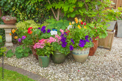 Fotobehang Tuin Colorful potted plants in garden corner.