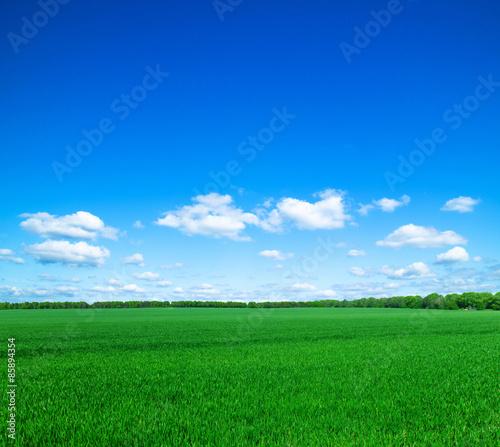 Fotobehang Groene field