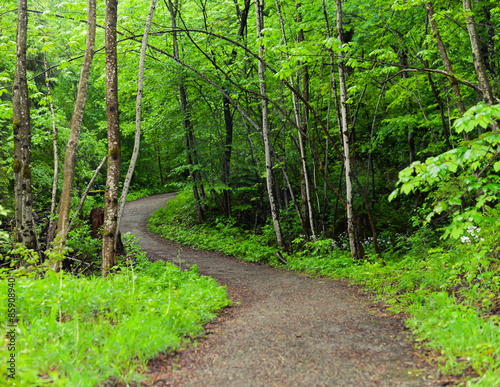 walkway to the forest. Wall mural