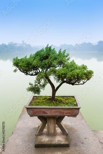 Photo Stands Bonsai Chinese green bonsai tree