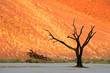 canvas print picture Dead Acacia tree against a red sand dune in late afternoon light, Sossusvlei, Namibia
