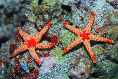 Onder water Noduled sea stars in the coral reef