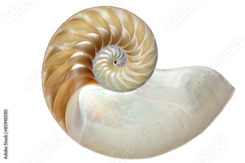Valokuva  Inside view of a nautilus shell