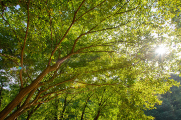 Obraz na Szklebranches with sunshine