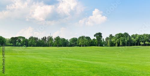 Fotografia Summer park