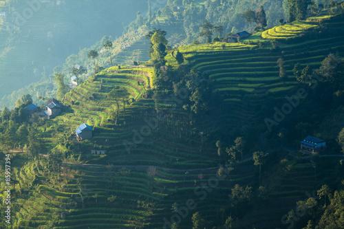 Wall Murals Nepal ナガルコットの段々畑と民家