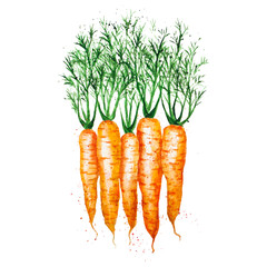 Panel Szklany Podświetlane Warzywa Vector watercolor carrots, isolated on white background