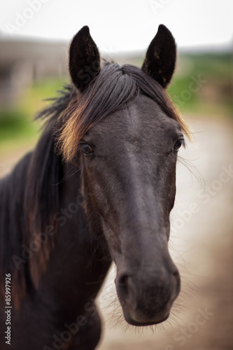 Photo  Portrait of a beautiful horse with a red fringe that looks into the camera  Outd