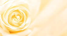 Banner With Yellow Rose