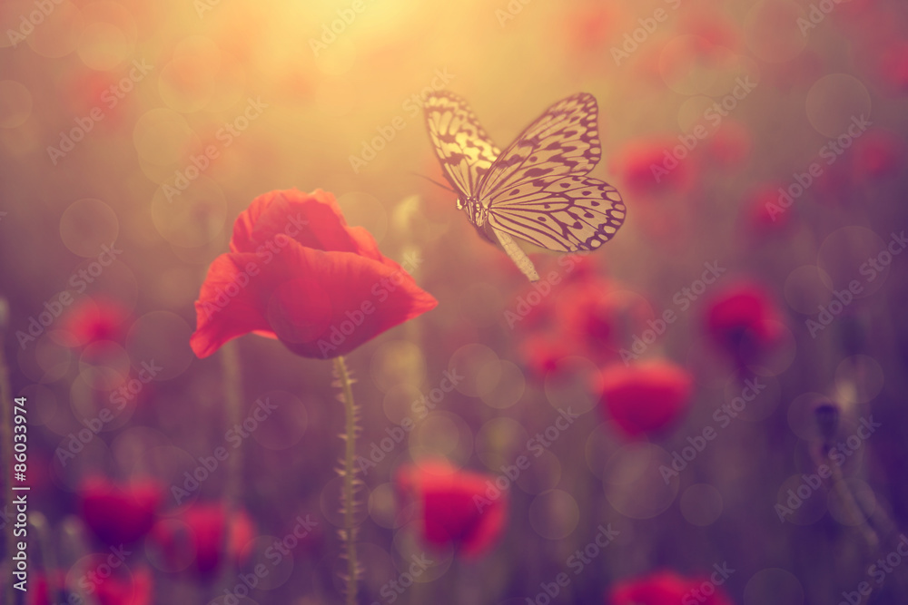 Fototapety, obrazy: Poppy and butterfly