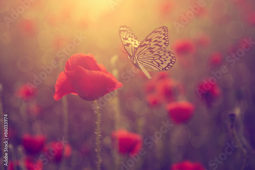 Photo  Poppy and butterfly