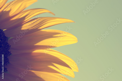 Tuinposter Zwavel geel Vintage sunflower