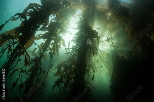 Tuinposter Koraalriffen Kelp Forest and Bright Light