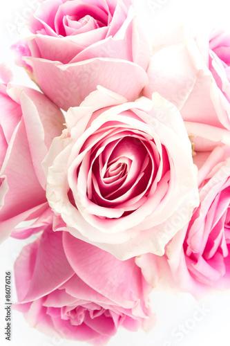 rozowa-i-biala-roza-na-bialym-tle