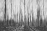 krajobraz niewyraźne jesień las - 86098934