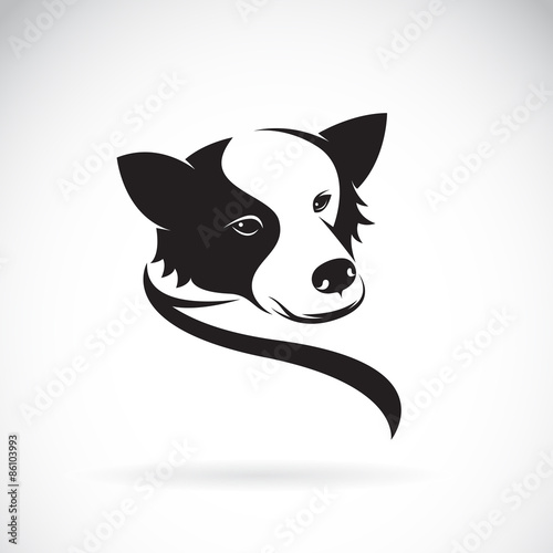 Tablou Canvas Vector image of an border collie dog on white background