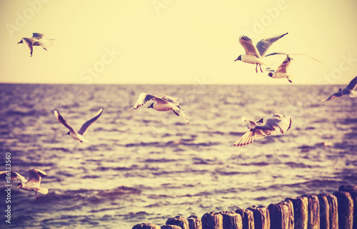 Keuken foto achterwand Retro Vintage retro stylized photo of birds on the sea.