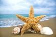 Starfish, isolated, sea life.