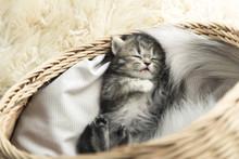 Cute Tabby Kitten Sleeping
