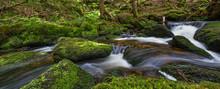 Brook In Forest (Jelení Potok, Sumava, Czech Republic, Europe)