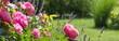 Leinwandbild Motiv Rosenbeet im Garten - Bannerformat