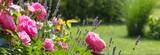 Fototapeta Kwiaty - Rosenbeet im Garten - Bannerformat