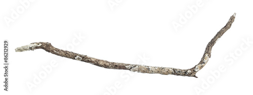 Fotografia, Obraz dry dead branch isolated on white background