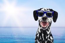 Dalmatian Dog Having Fun At Beach