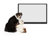 Dog And Cat In Front Of Blank Monitor